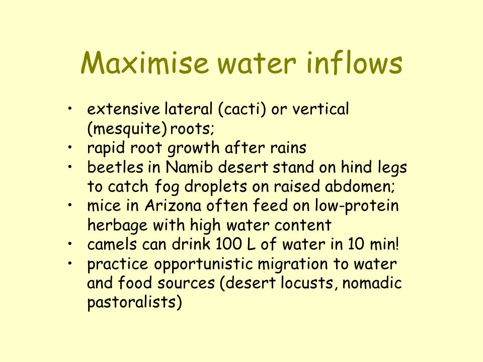Maximise water inflows extensive lateral (cacti) or vertical (mesquite) roots; rapid root growth after rains beetles in Namib desert stand on hind leg