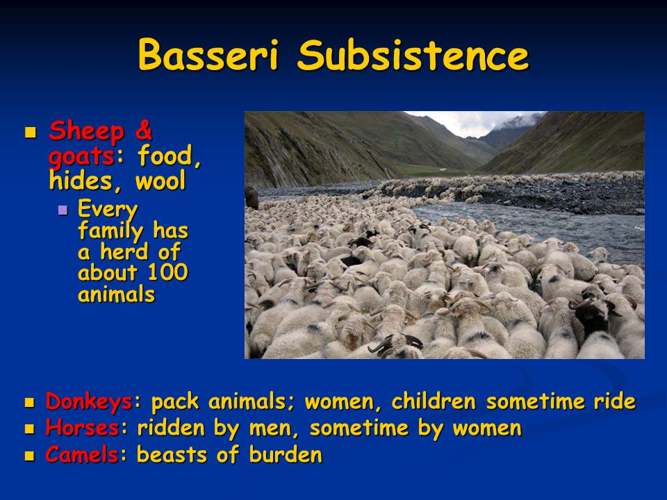 Basseri Subsistence Sheep & goats: food, hides, wool Sheep & goats: food, hides, wool Every family has a herd of about 100 animals Every family has a herd of about 100 animals Donkeys: pack animals; women, children sometime ride Donkeys: pack animals; women, children sometime ride Horses: ridden by men, sometime by women Horses: ridden by men, sometime by women Camels: beasts of burden Camels: beasts of burden