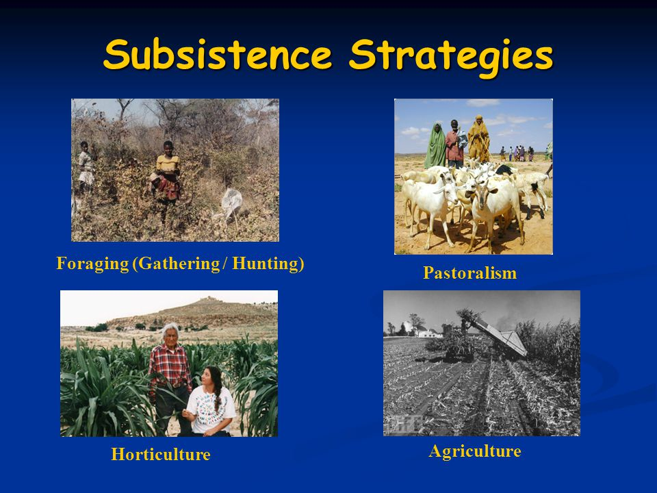 Subsistence Strategies Foraging (Gathering / Hunting) Pastoralism Horticulture Agriculture
