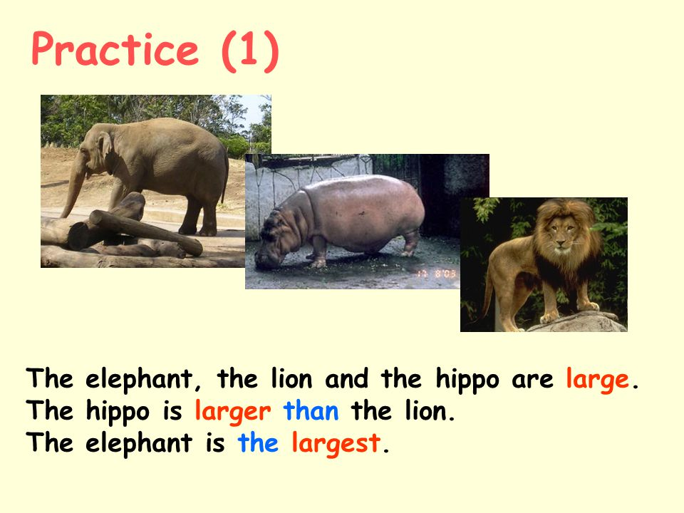 The elephant, the lion and the hippo are large.The hippo is larger than the lion.