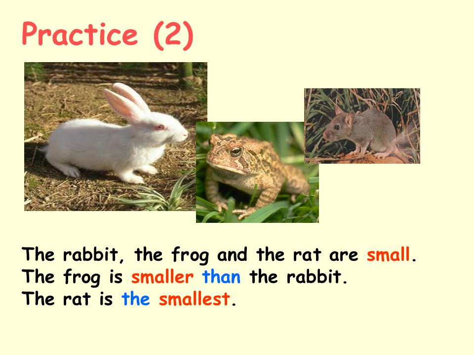 The rabbit, the frog and the rat are small.The frog is smaller than the rabbit.