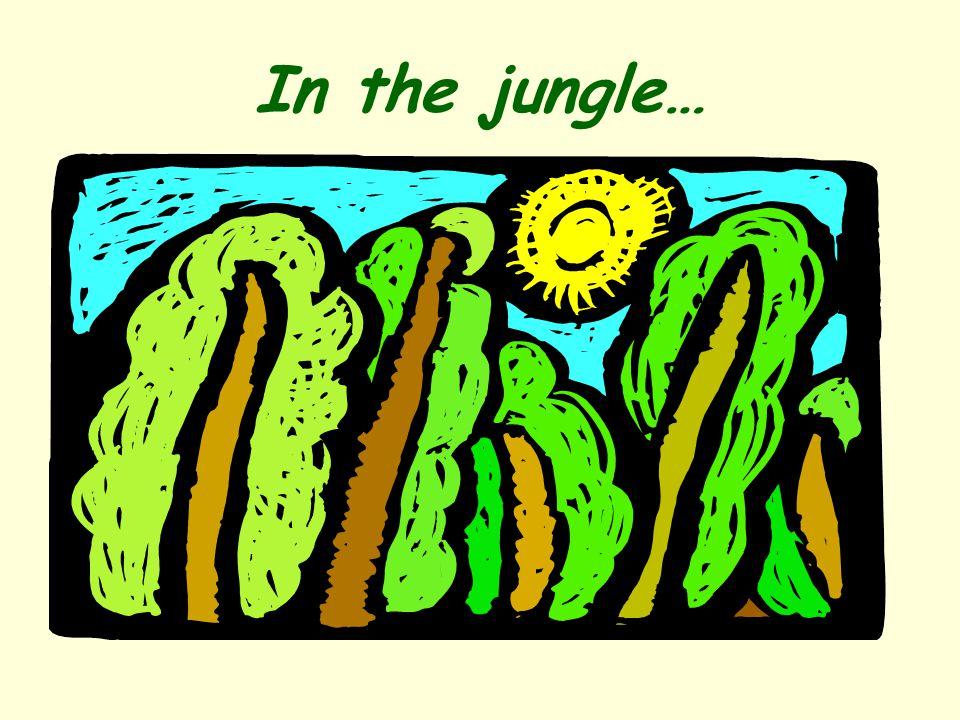 In the jungle…
