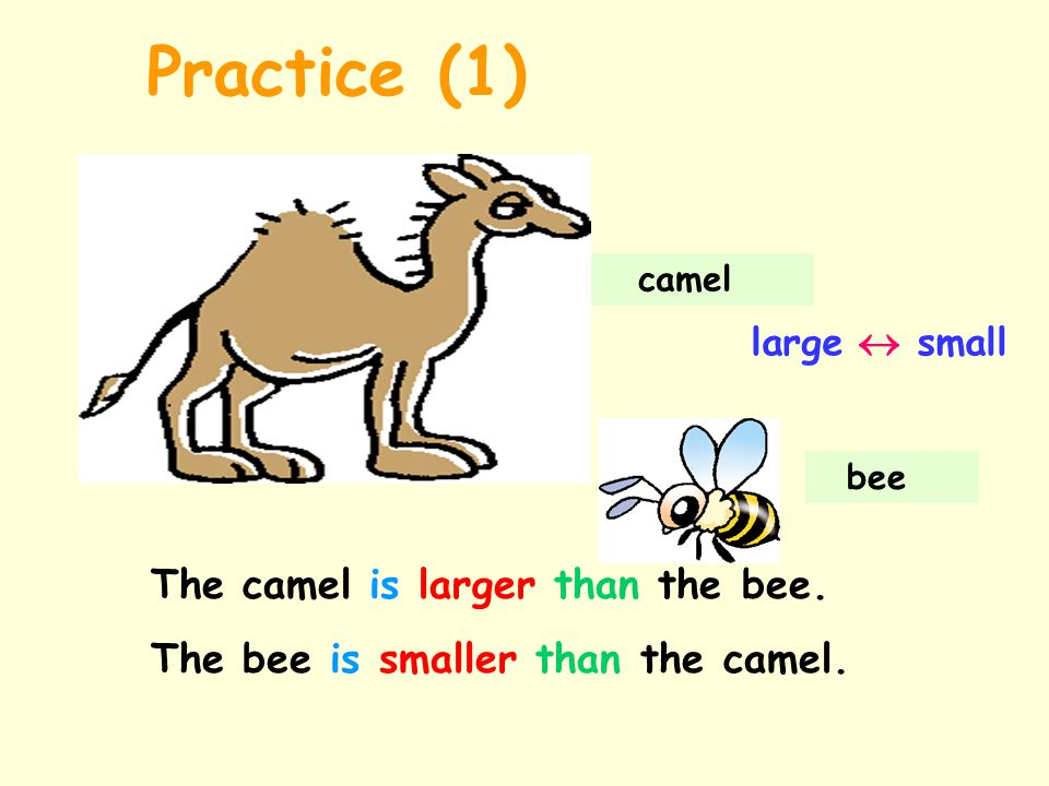 camel bee large  small The camel is larger than the bee.