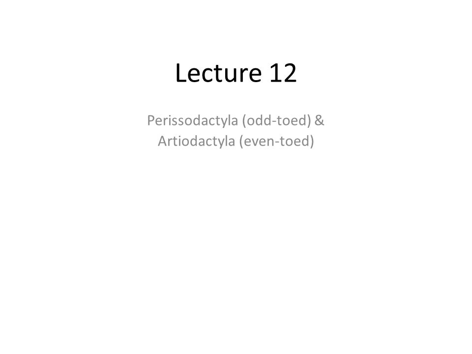 Lecture 12 Perissodactyla (odd-toed) & Artiodactyla (even-toed)