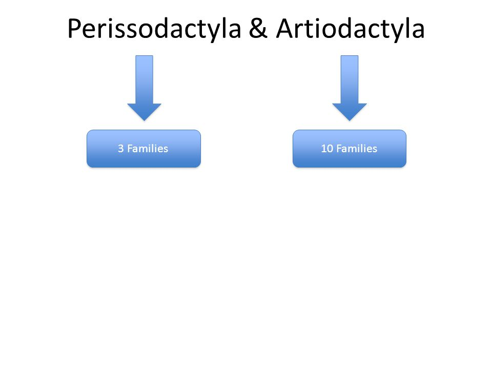 Perissodactyla & Artiodactyla 3 Families 10 Families