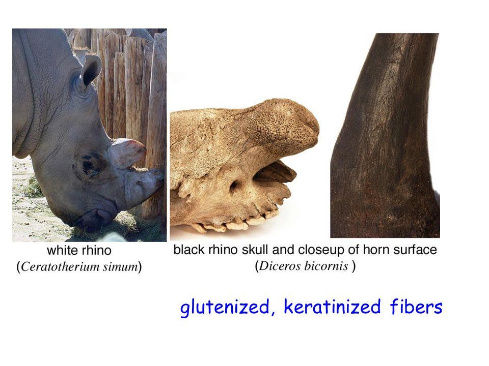glutenized, keratinized fibers