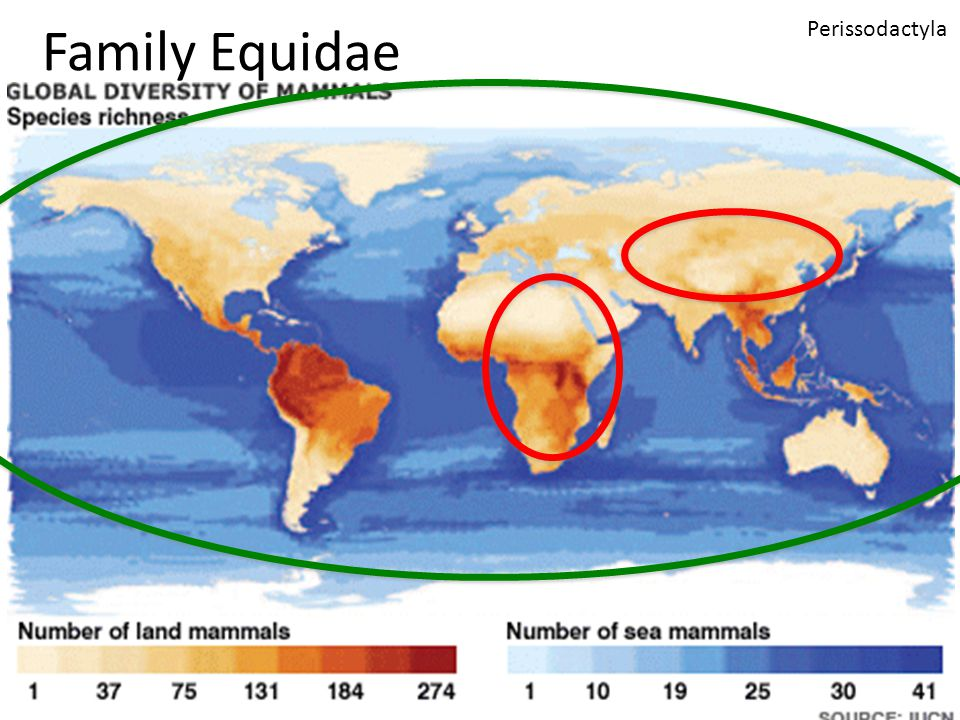 Family Equidae Perissodactyla