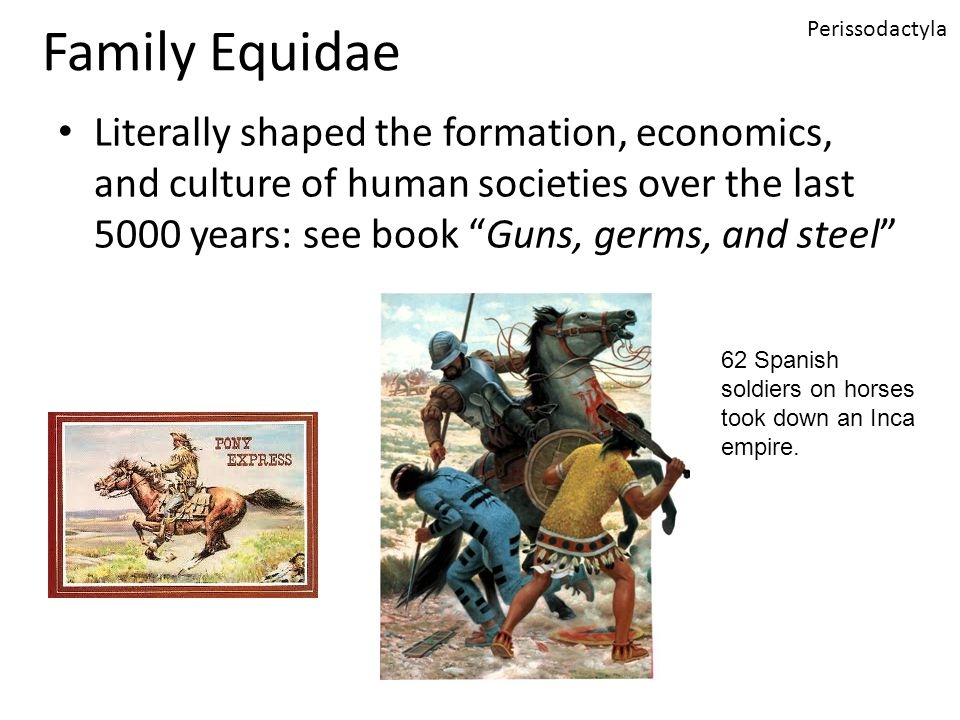 Family Equidae Literally shaped the formation, economics, and culture of human societies over the last 5000 years: see book Guns, germs, and steel Perissodactyla 62 Spanish soldiers on horses took down an Inca empire.