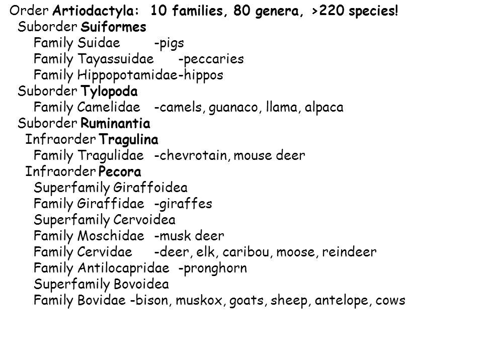 Order Artiodactyla: 10 families, 80 genera, >220 species.