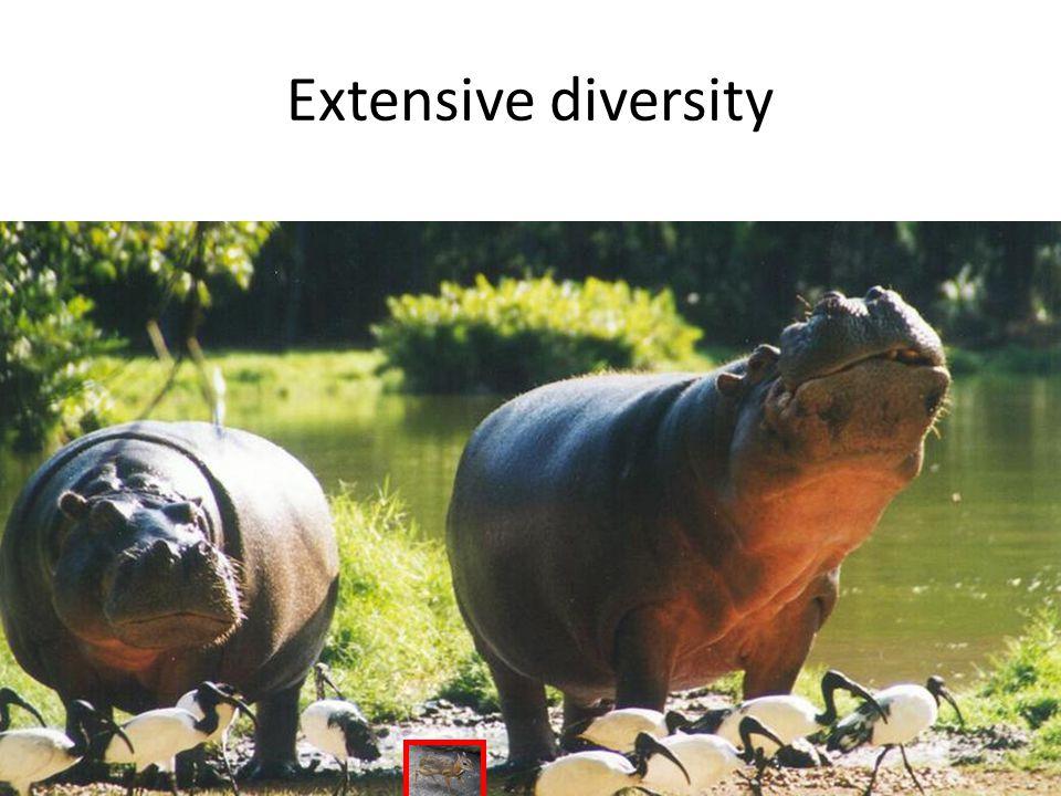 Extensive diversity