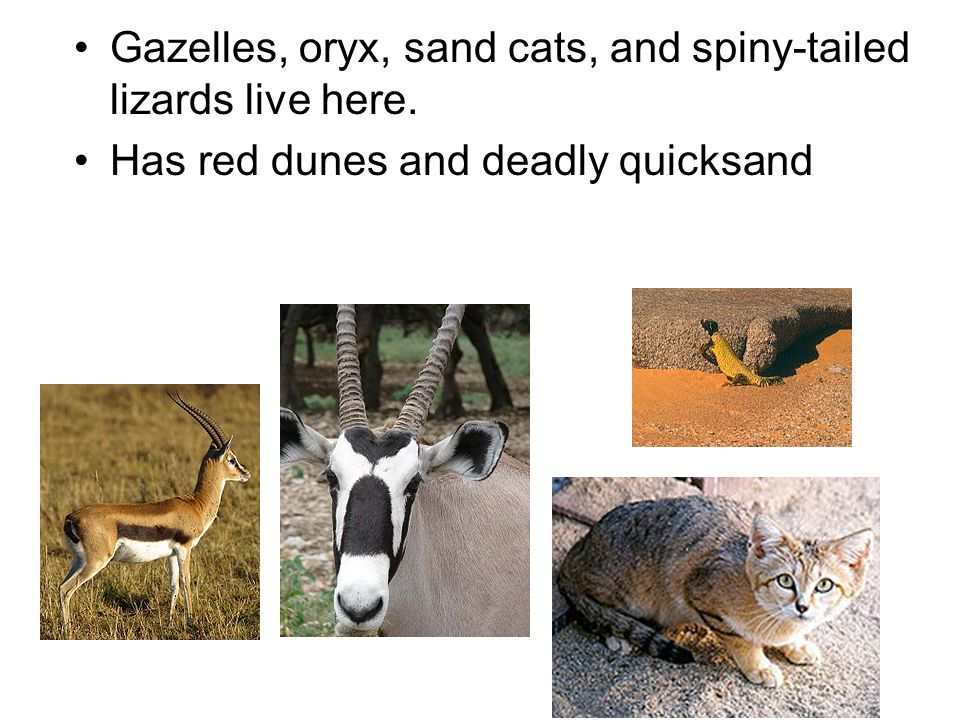 Gazelles, oryx, sand cats, and spiny-tailed lizards live here. Has red dunes and deadly quicksand