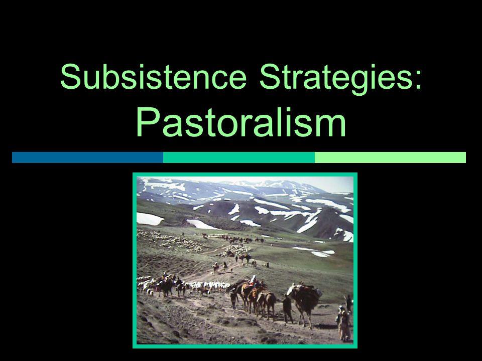 Subsistence Strategies: Pastoralism