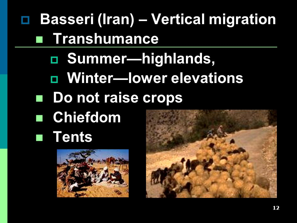 12  Basseri (Iran) – Vertical migration Transhumance  Summer—highlands,  Winter—lower elevations Do not raise crops Chiefdom Tents