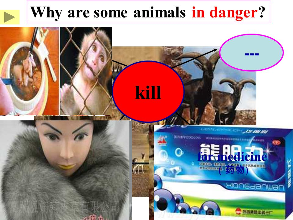 kill --- Why are some animals in danger? for food for clothes for medicine (药物 )