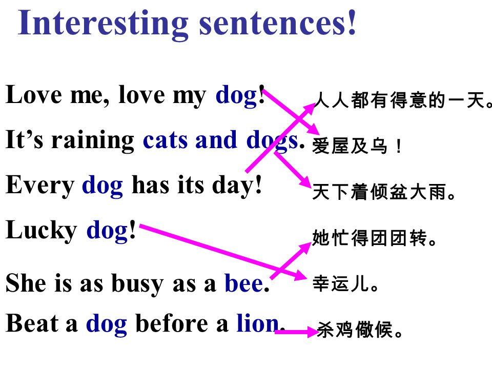 Interesting sentences. Love me, love my dog. It's raining cats and dogs.