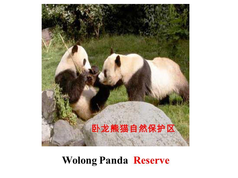 卧龙熊猫自然保护区 Wolong Panda Reserve