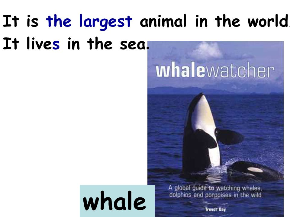 whale It is the largest animal in the world. It lives in the sea.