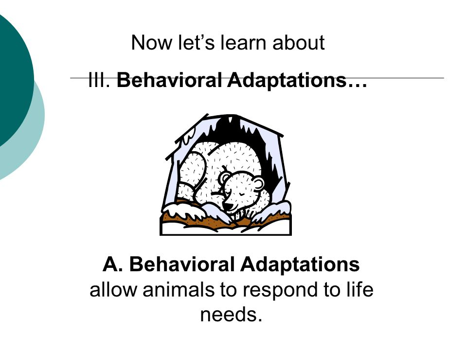 Now let's learn about III. Behavioral Adaptations… A.