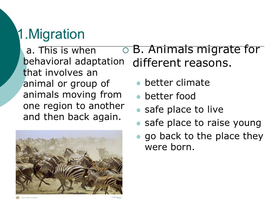 1.Migration  B. Animals migrate for different reasons.