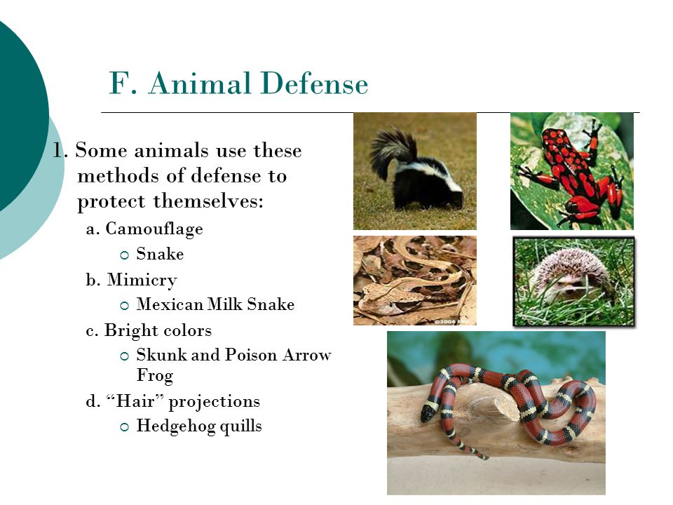 F. Animal Defense 1. Some animals use these methods of defense to protect themselves: a.