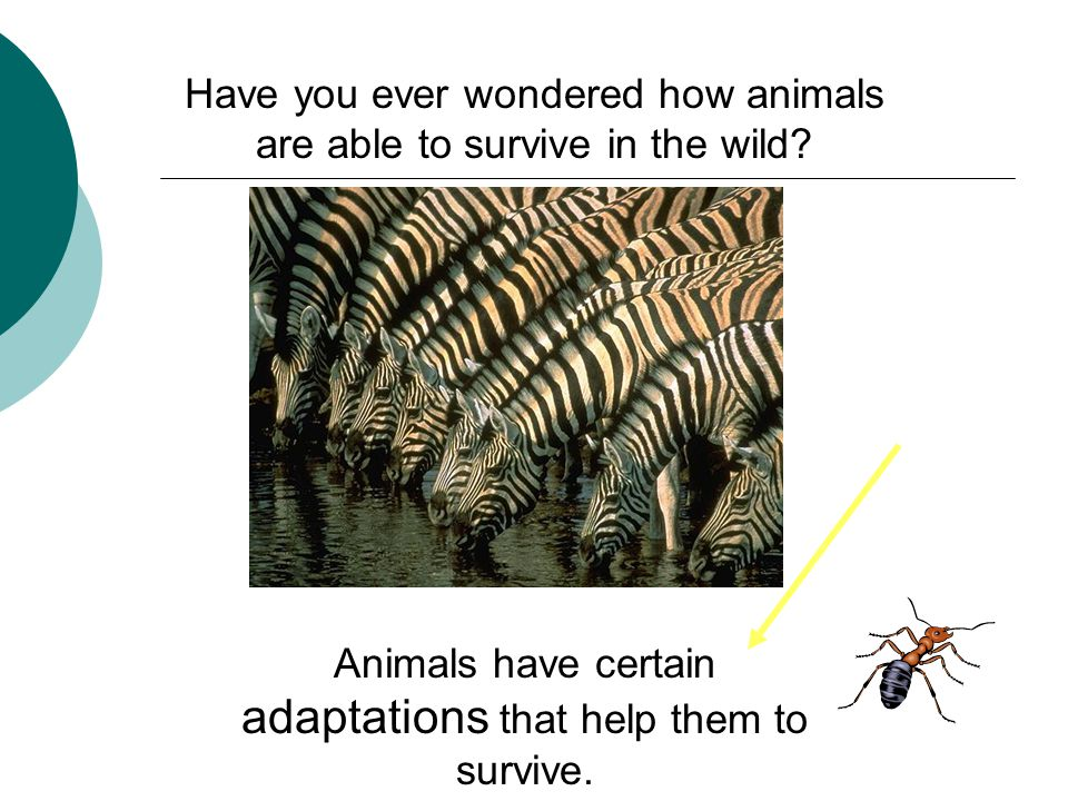 Have you ever wondered how animals are able to survive in the wild.