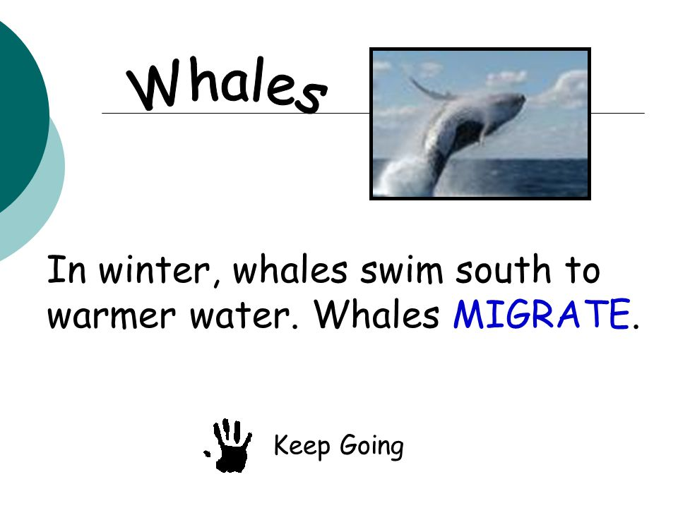 In winter, whales swim south to warmer water. Whales MIGRATE. Keep Going