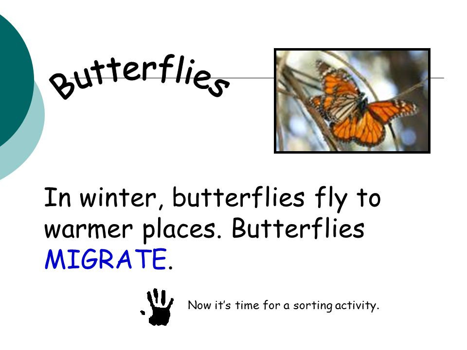 In winter, butterflies fly to warmer places. Butterflies MIGRATE.