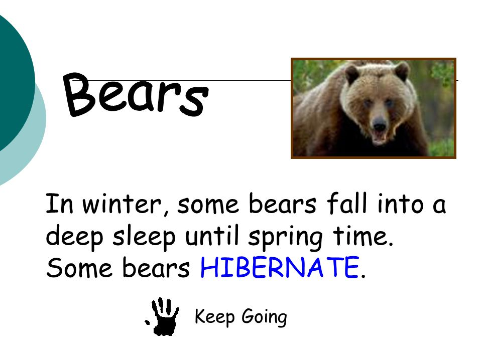 In winter, some bears fall into a deep sleep until spring time. Some bears HIBERNATE. Keep Going