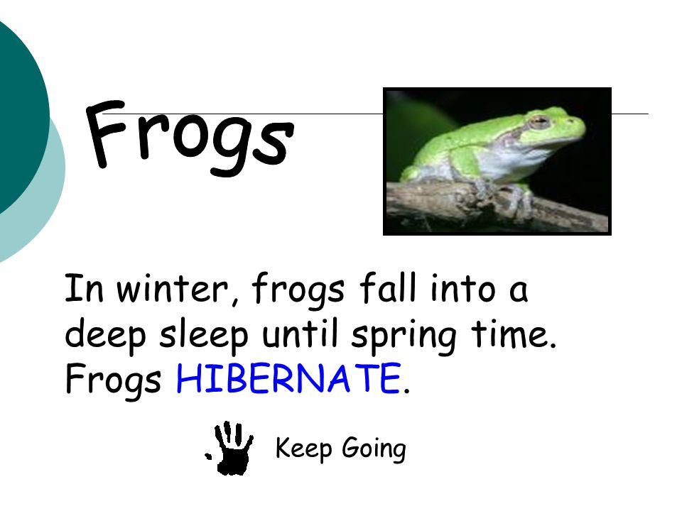 In winter, frogs fall into a deep sleep until spring time. Frogs HIBERNATE. Keep Going