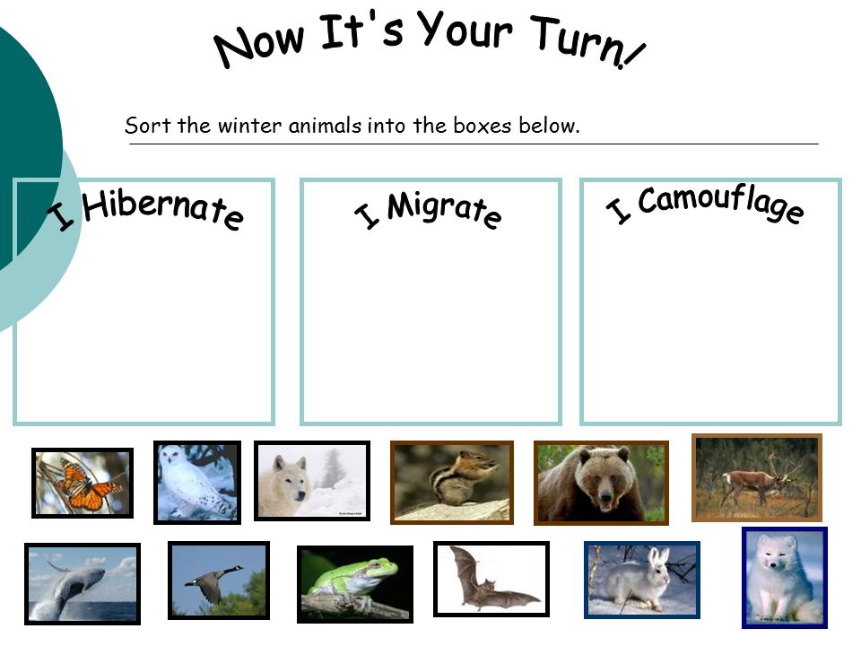 Sort the winter animals into the boxes below.