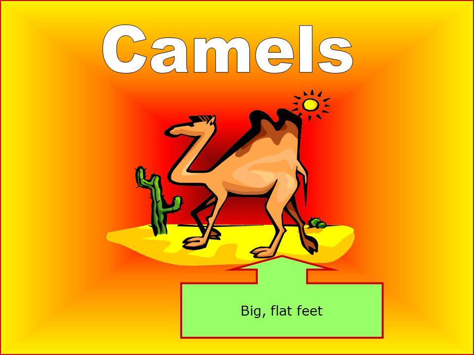 Big, flat feet