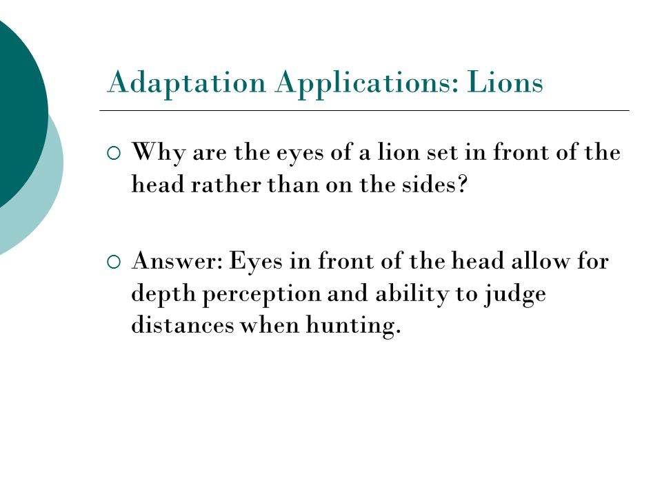 Adaptation Applications: Lions  Why are the eyes of a lion set in front of the head rather than on the sides.