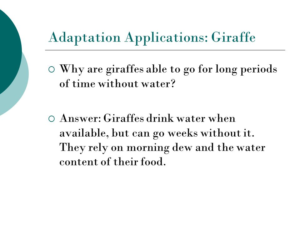 Adaptation Applications: Giraffe  Why are giraffes able to go for long periods of time without water.
