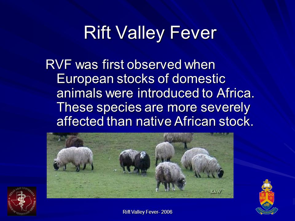 Rift Valley Fever- 2006 Rift Valley Fever RVF was first observed when European stocks of domestic animals were introduced to Africa.