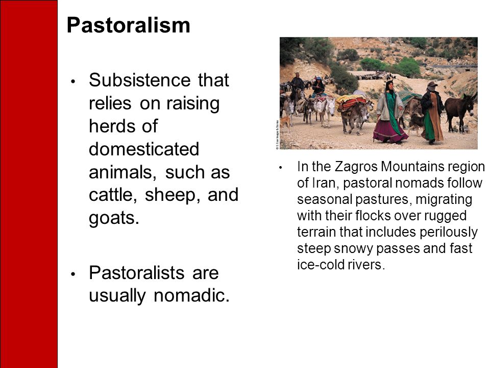 Pastoralism Subsistence that relies on raising herds of domesticated animals, such as cattle, sheep, and goats.