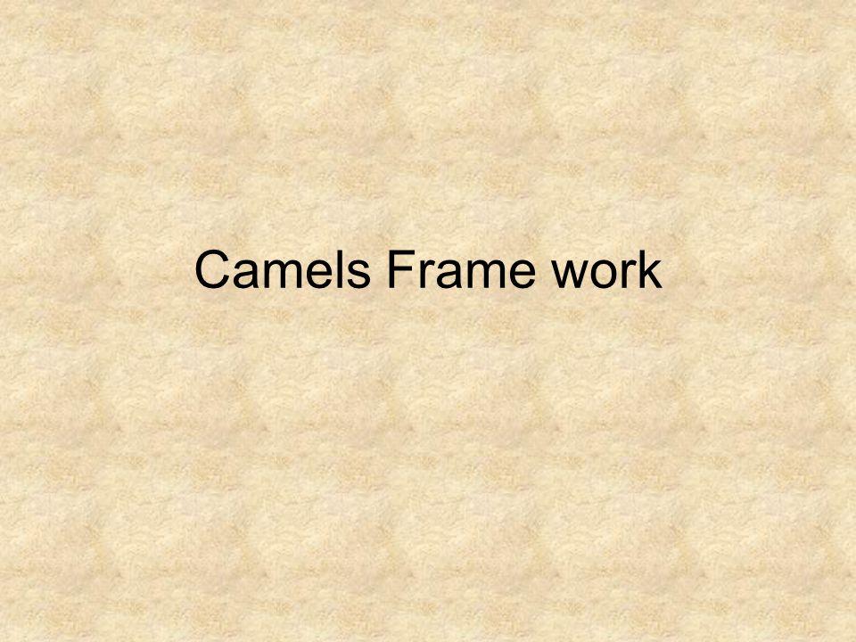 Camels Frame work