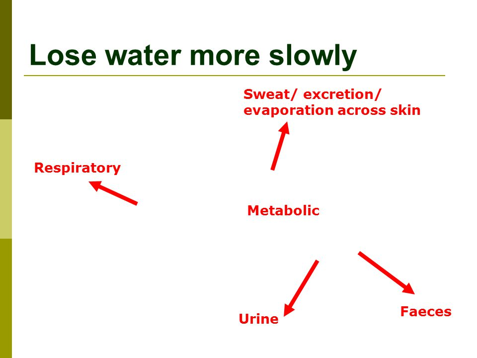 Lose water more slowly Respiratory Urine Faeces Sweat/ excretion/ evaporation across skin Metabolic