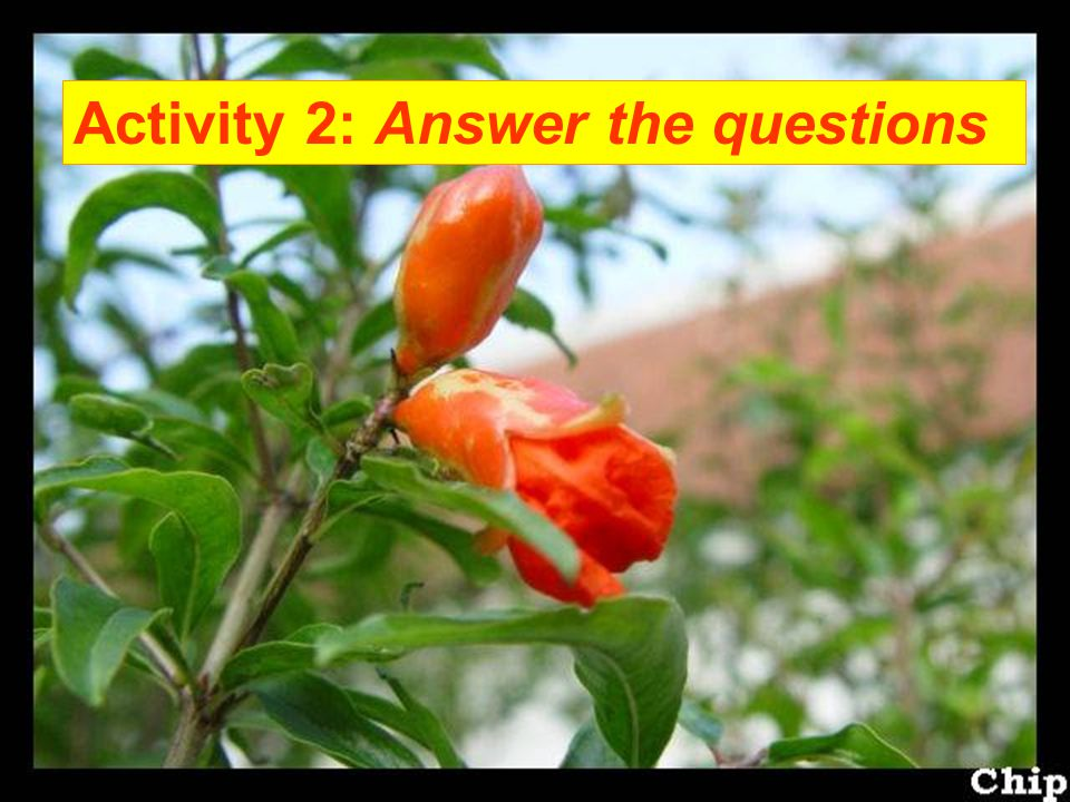 Activity 2: Answer the questions