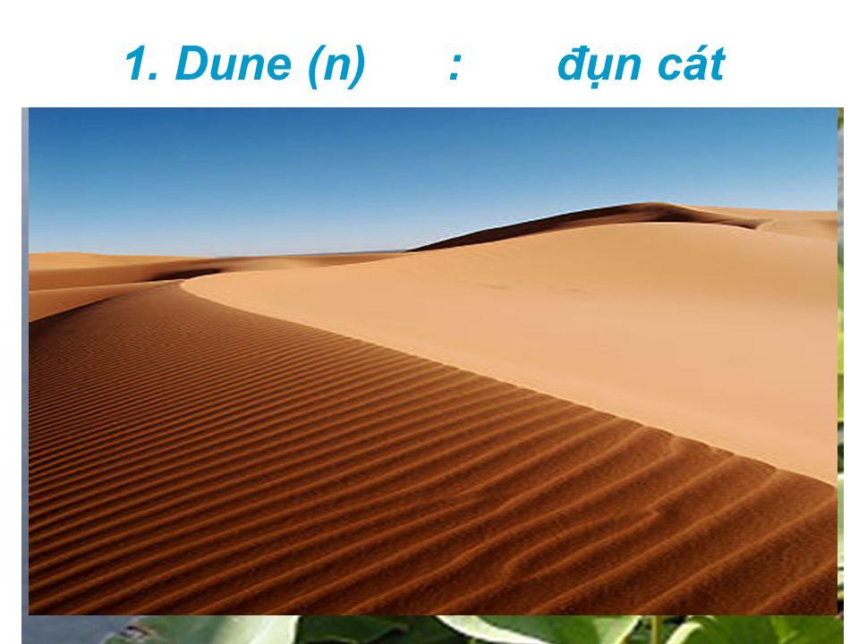 1. Dune (n) : đụn cát