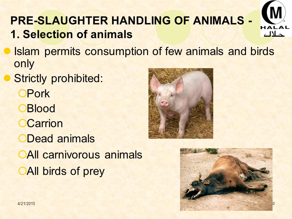 4/21/201510 PRE-SLAUGHTER HANDLING OF ANIMALS - 1.