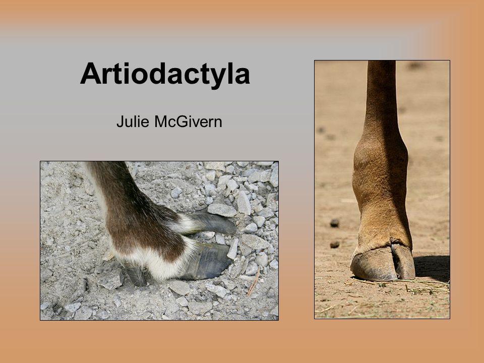 Taxonomy Eutheria (placental mammals) Perissodactyla (odd-toed ungulates) C etartiodactyla Artiodactyla (even-toed ungulates) Cetacea (dolphins, porpoises, and whales)