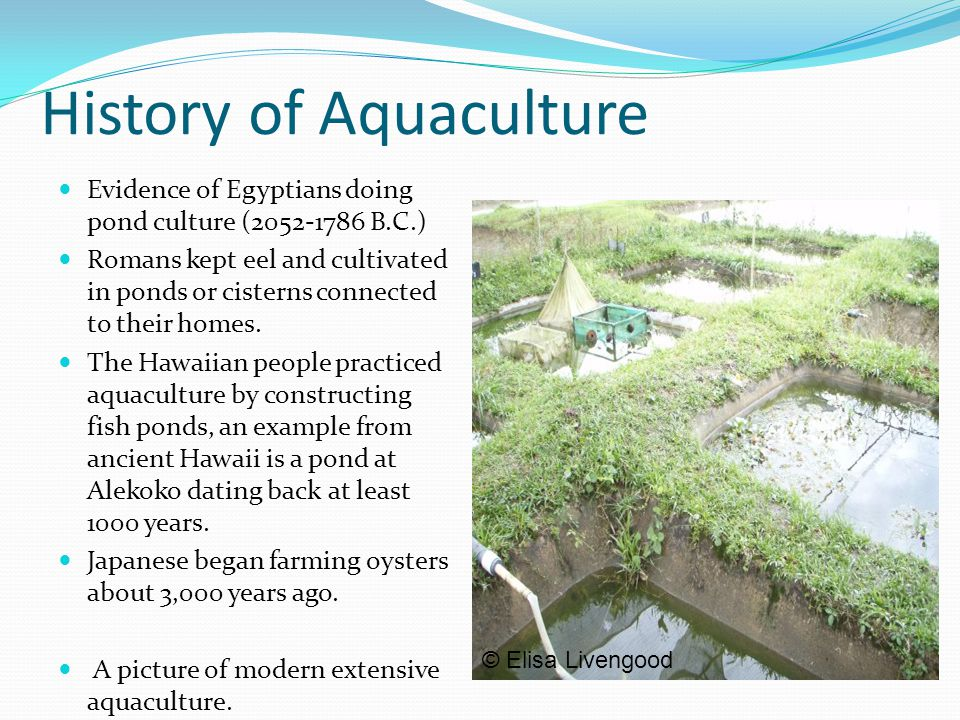 History of Aquaculture Evidence of Egyptians doing pond culture (2052-1786 B.C.) Romans kept eel and cultivated in ponds or cisterns connected to thei