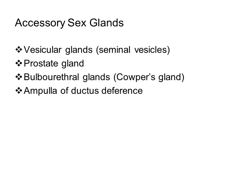 Accessory Sex Glands  Vesicular glands (seminal vesicles)  Prostate gland  Bulbourethral glands (Cowper's gland)  Ampulla of ductus deference