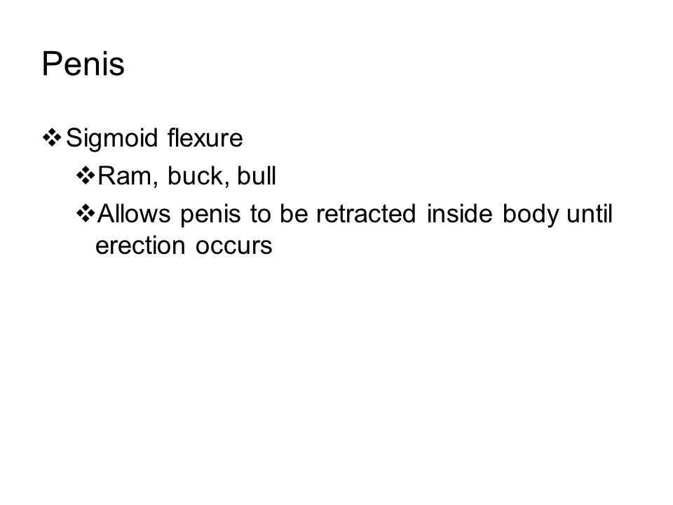 Penis  Sigmoid flexure  Ram, buck, bull  Allows penis to be retracted inside body until erection occurs