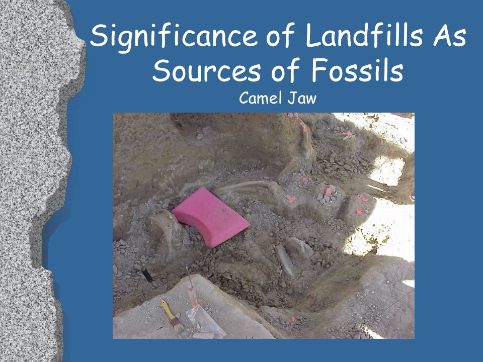 Significance of Landfills As Sources of Fossils Camel Vertebrae