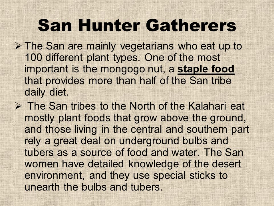 San Hunter Gatherers  The San are mainly vegetarians who eat up to 100 different plant types. One of the most important is the mongogo nut, a staple