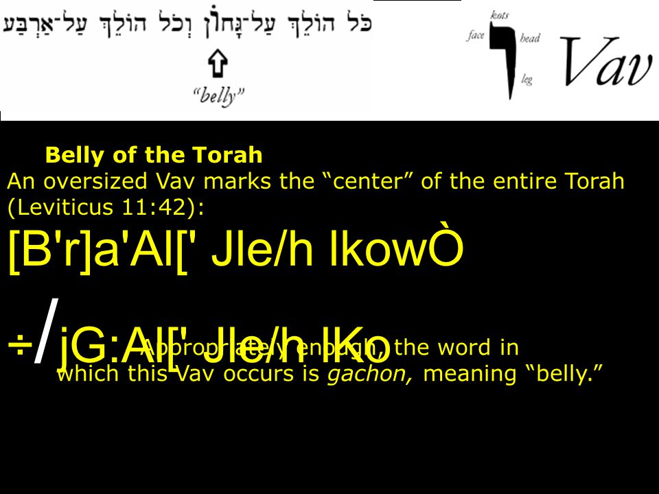 """1. The Belly of the Torah An oversized Vav marks the """"center"""" of the entire Torah (Leviticus 11:42): Appropriately enough, the word in which this Vav"""