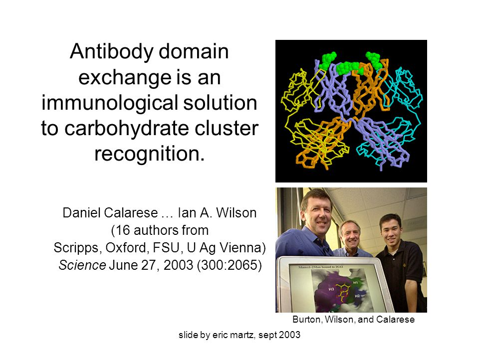 slide by eric martz, sept 2003 Antibody domain exchange is an immunological solution to carbohydrate cluster recognition.