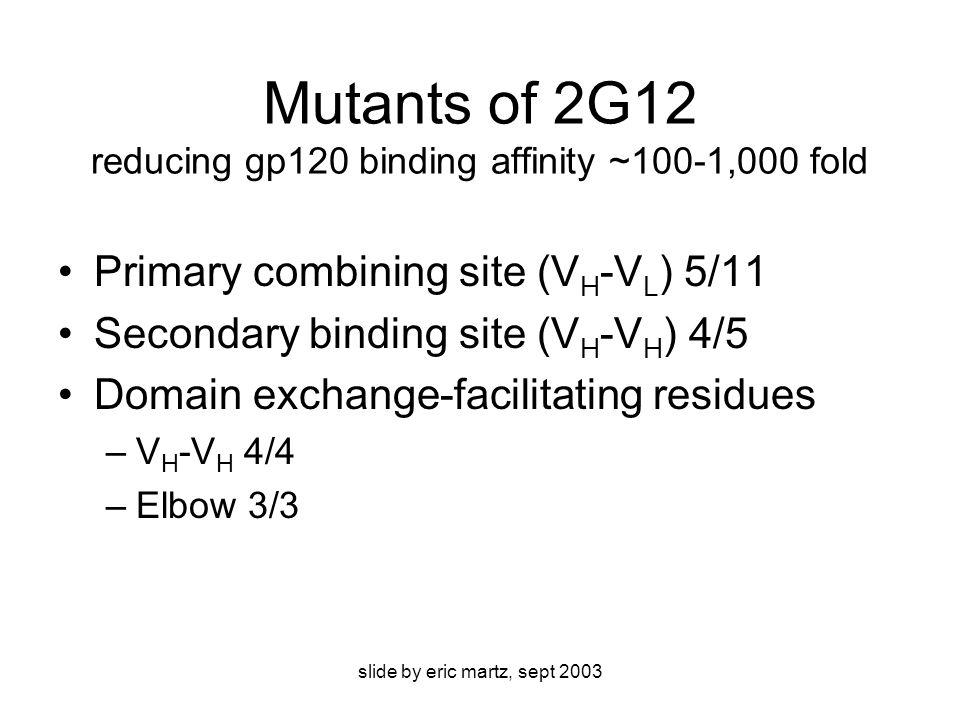 slide by eric martz, sept 2003 Mutants of 2G12 reducing gp120 binding affinity ~100-1,000 fold Primary combining site (V H -V L ) 5/11 Secondary binding site (V H -V H ) 4/5 Domain exchange-facilitating residues –V H -V H 4/4 –Elbow 3/3