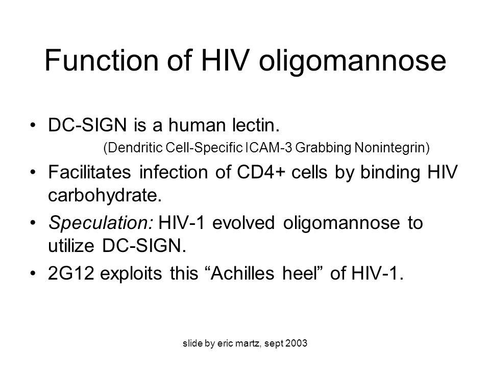 slide by eric martz, sept 2003 Function of HIV oligomannose DC-SIGN is a human lectin.